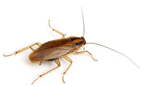 отпугиватель грызунов и насекомых Пест Репеллер
