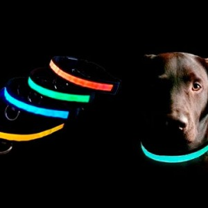 Luminous-Collar-For-Dog1_enl