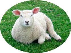 односторонее одеяло из натуральной овечьей шерсти